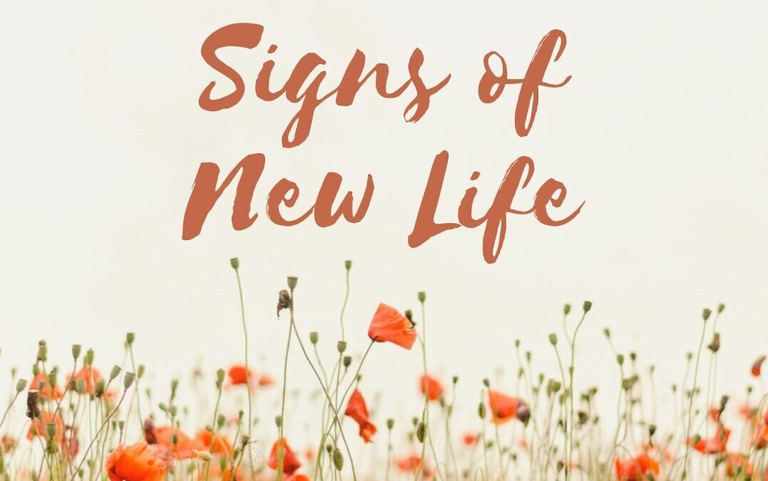 Easter Sunday: New Life